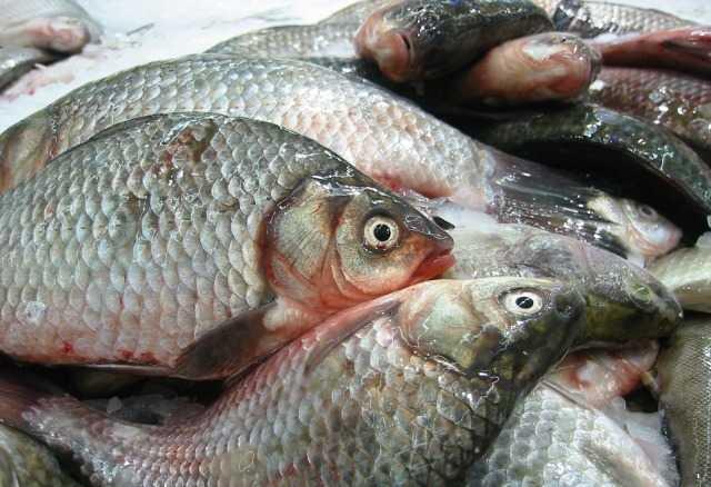 мороженая рыба опт